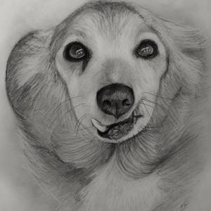Zeichnung-KD516