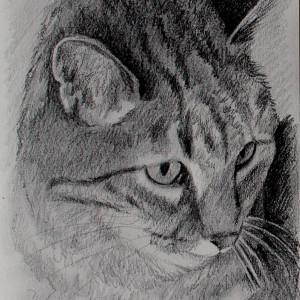 zeichnung-KD181