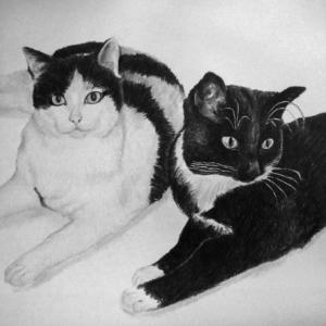 Tierzeichnung20190303