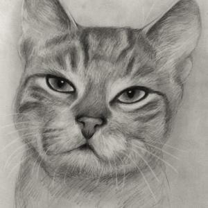 zeichnung-347