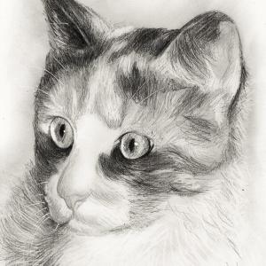 zeichnung-384