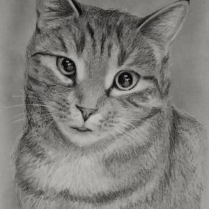 zeichnung-455.1