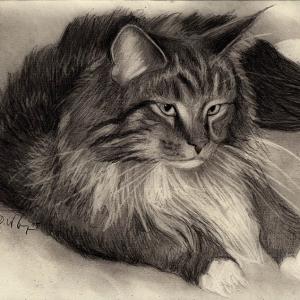 zeichnung-KD194