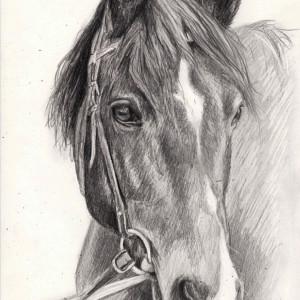 zeichnung-204-4