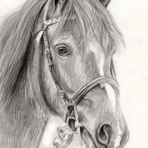 zeichnung-204-5