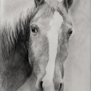 zeichnung-386