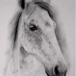 zeichnung-KD164