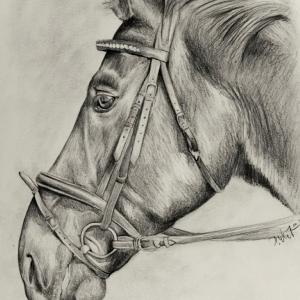 zeichnung-226