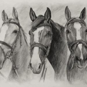 zeichnung-260