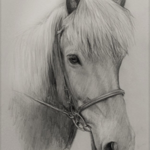 zeichnung-311