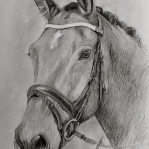 zeichnung-387