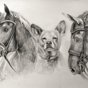 Zeichnung-302