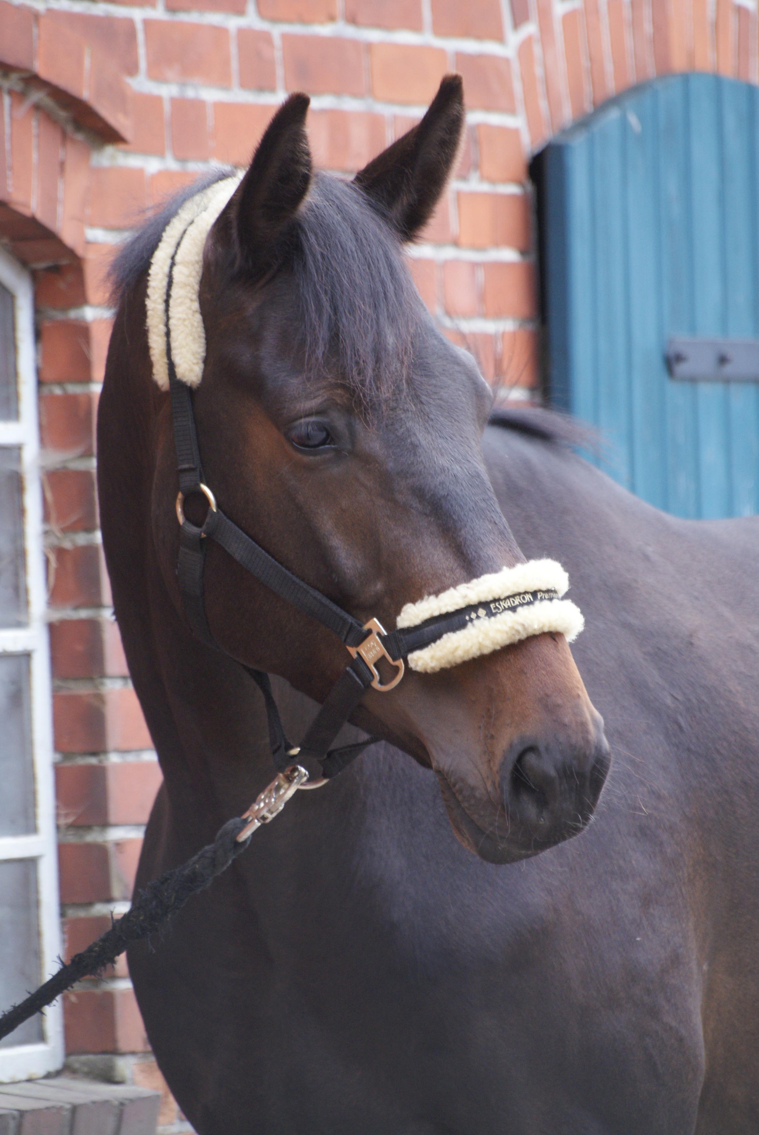 Fotovorlage eines Pferdes