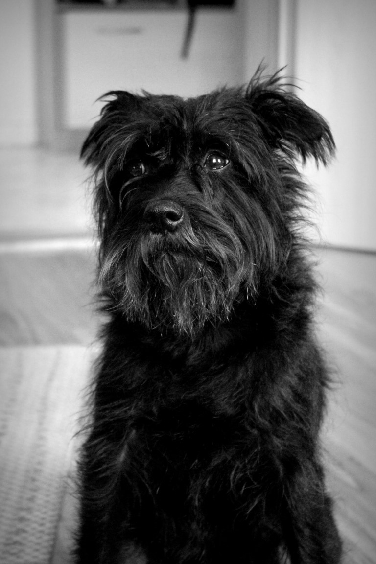 Fotovorlage eines Hundes