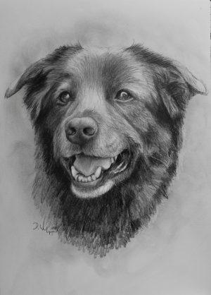 Hundezeichnung Portrait zeichnen lassen