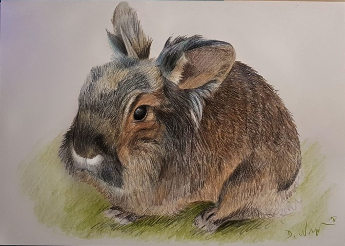 Portrait zeichnen lassen Kaninchen