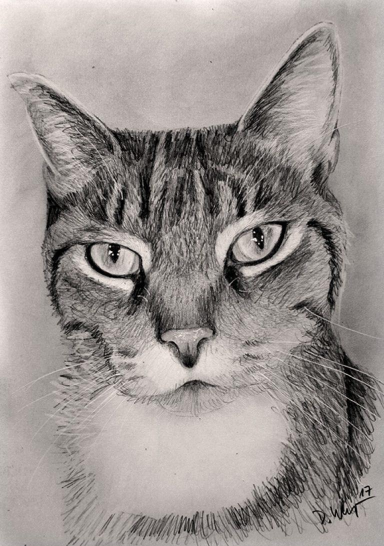 Katzenzeichnung